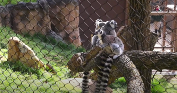 New Madagascar exhibit opens at Brandywin Zoo Thursday